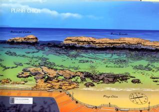 Guía de inmersiones en Gran Canaria
